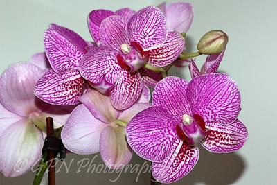 Indoor Flowers 2009