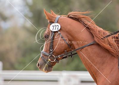 772- 2nd Rider