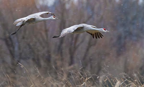 Rails, Cranes & Gallinues