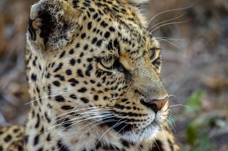 Zuid Afrika 2015 258.jpg