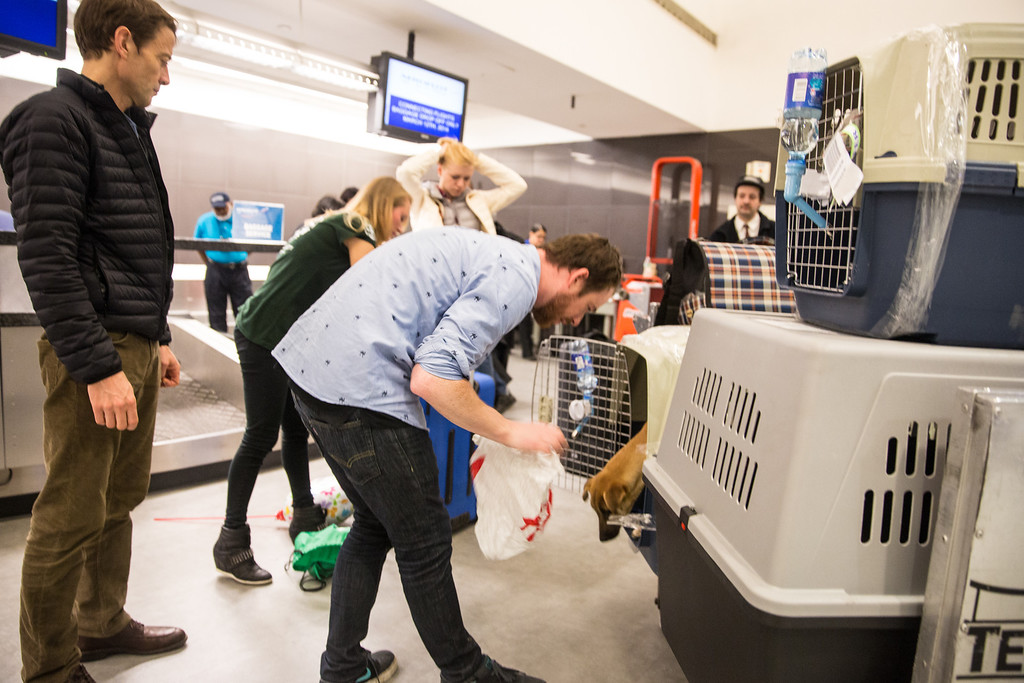 . In this image released on Friday, March 14, 2014, the dogs are released from their kennels to stretch and run around before the next leg of their journey home. Humane Society International has been working with Robin Douglas Macdonald and Olympic silver medalist Gus Kenworthy for the past several weeks in trying to transport the dogs from Sochi, Russia, to the United States. (Christopher Lane/AP Images for Humane Society International)