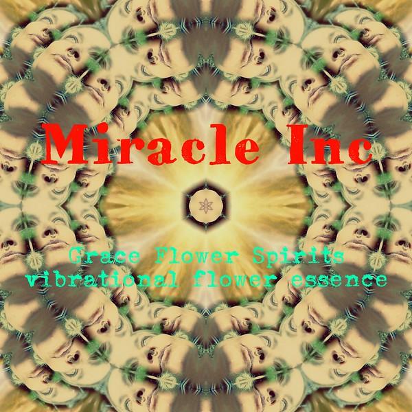 image3A62959_mirror.jpg