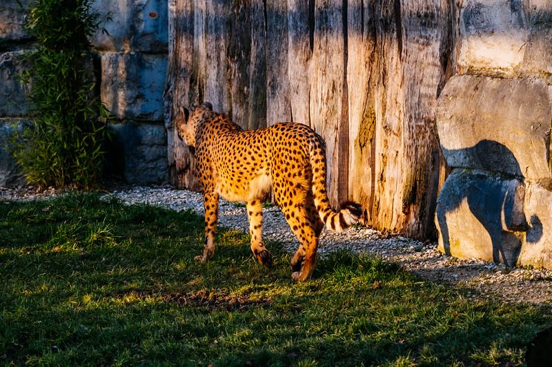 Tonis Zoo-0283.jpg