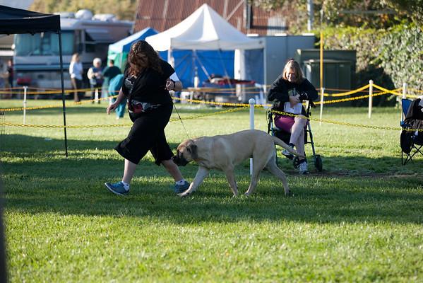 2011 Del Valle Dog Show Pleasanton CA