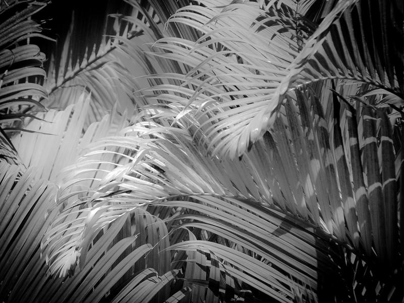 13 Palms - No. 8
