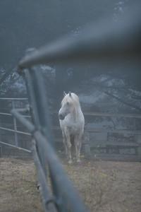 Hite Labrum Ranch Napa CA