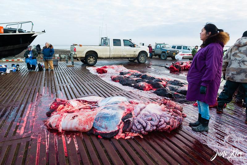 Utqiagvik Whaling-6104955-Juno Kim.jpg
