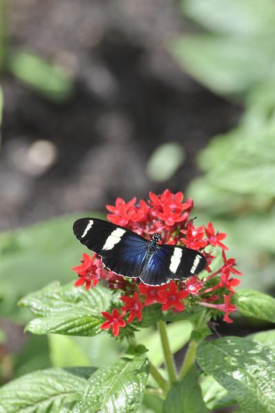 2012-Summer-Chicago-Botanic