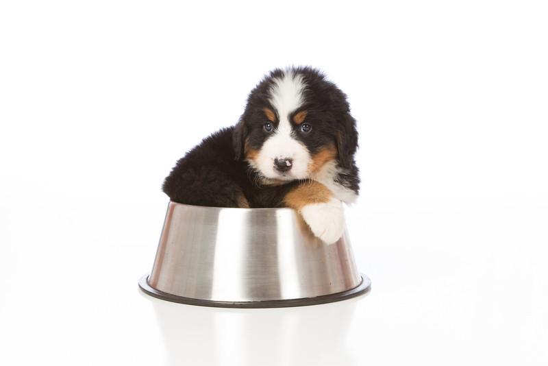 2013-Pearson Pups-Jun02-0379.jpg