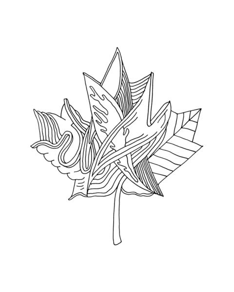 Inner Maple Leaves