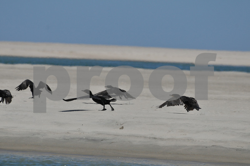 Pictues from cape and father day 154.JPG