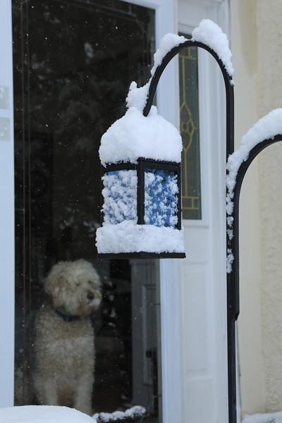 SESAME SNOW A.JPG