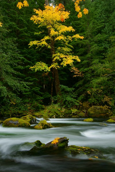 Clackamas River in the fall