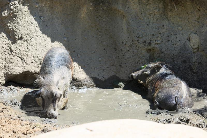 2015_08_20 Kansas City Zoo 037.jpg