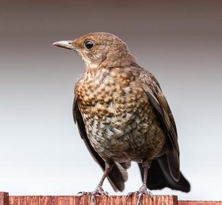2011 Birds in the backyard