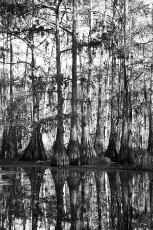 Atchafalaya and New Orleans 2010