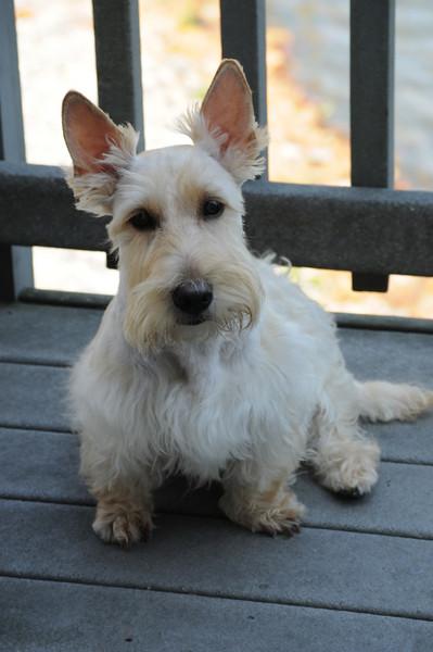 a cute doggie at Virginia Beach