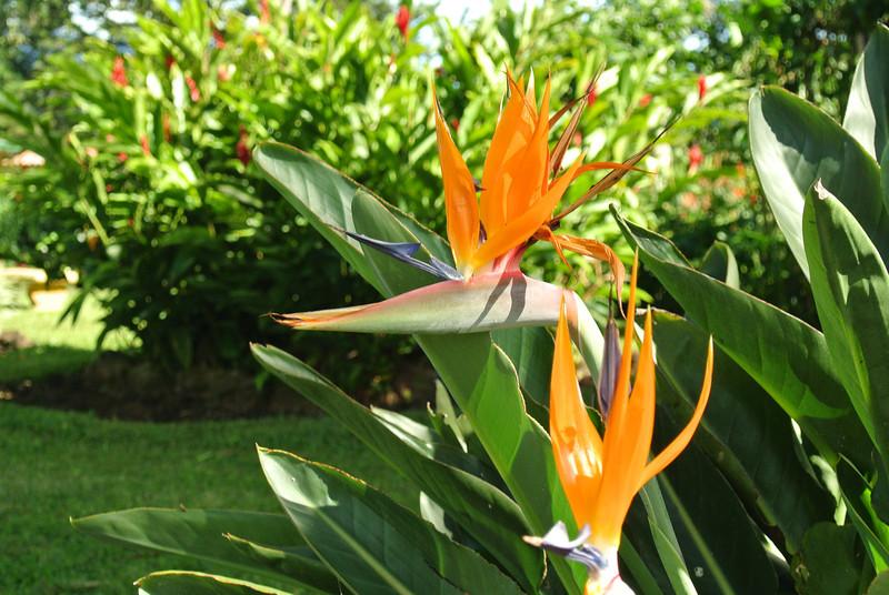 2012_Costa_Rica_December_  0012.JPG