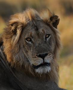 Zimbabwe Safari 2016