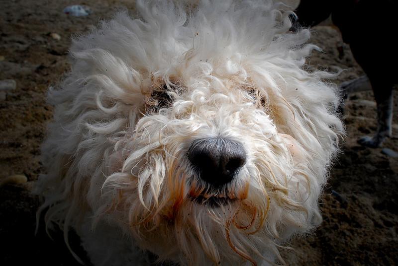 dogs_beach-075.jpg