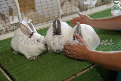 Rabbit Show 2015