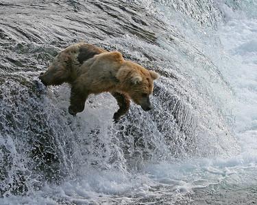 """""""Bear Essence"""" by Lori Agrella"""