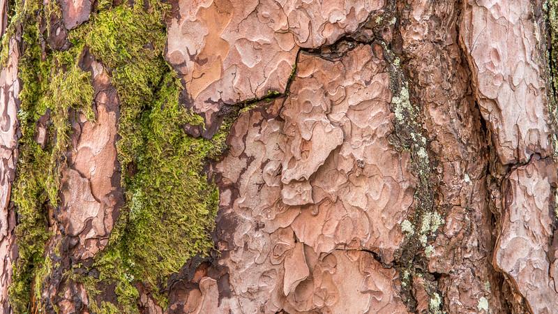 Caledonian Pine Bark