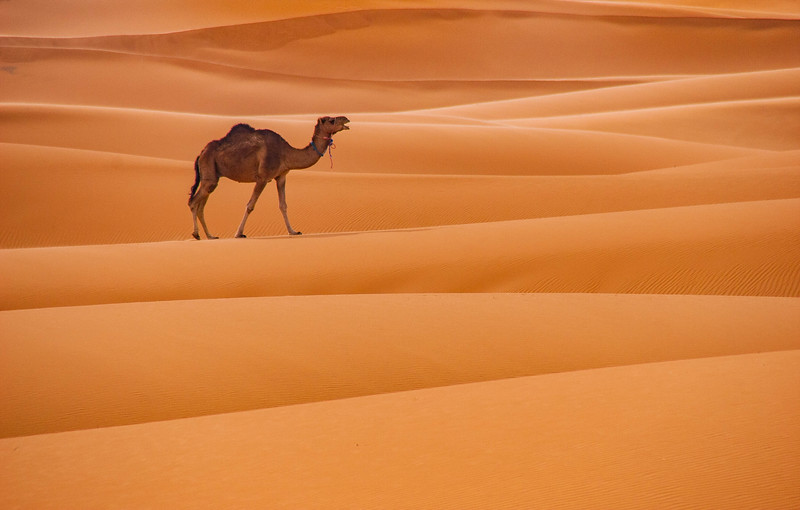 This photo represents the freedom to wander. This camel in the Sahara Desert at Mergouza, Morocco, is making its way to a watering hole, but he'll eventually head back to join the other camels in his herd. To me, travel is about breaking free from the constraints of everyday life. It's a chance to ditch the routine and not have everything so tightly scheduled. At the time I took this photo, my travel buddy and I had broken away from our tour group of 8 and made a plan to take the overnight bus to Fes. So, we spent the day at the Auberge Kasbah with this view! Eventually a delivery truck was heading into town and the driver took us to the bus station. By morning we had decided to skip Fes and go on to Chefchaouen based on the recommendation of another traveler. It was the best decision and I'm glad I didn't get off the bus.#MyFavoritePlaces https://www.farflungtravels.com/ive-been-through-the-desert-on-a-camel-with-no-name/
