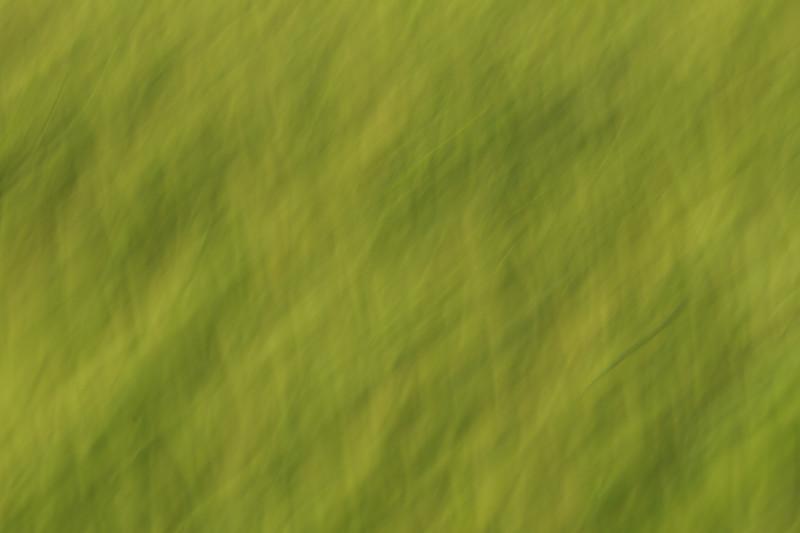 Green abstract 3206-3206.jpg