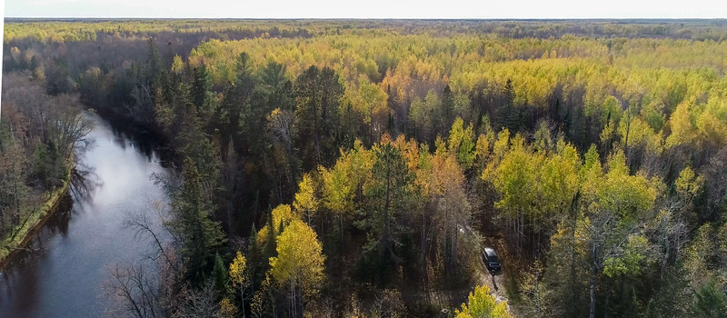 Wood Thrush Woods on the Whiteface River Sax-Zim Bog MN DJI_0003-7.jpg