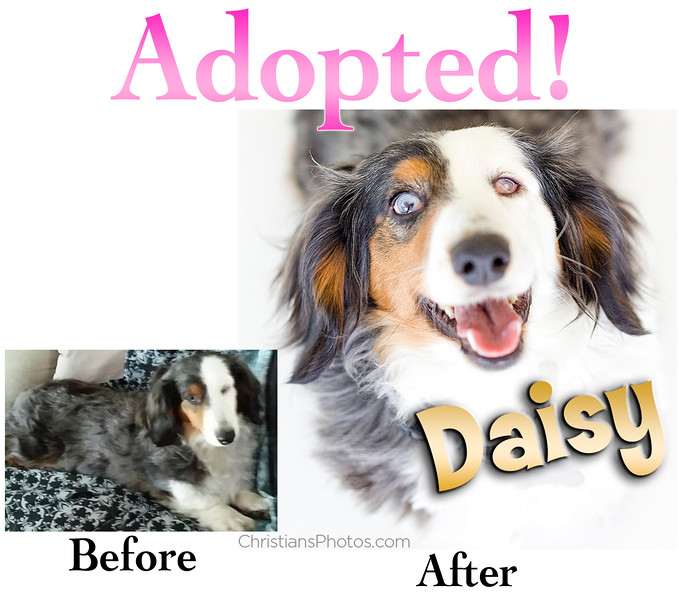 daisy_BA.jpg