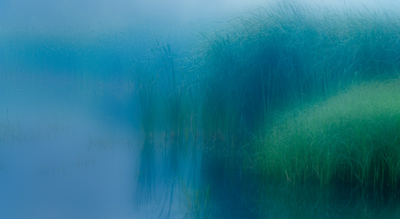 Reeds in fog_Aug 28-2013_01 (1 of 2)-Edit.jpg