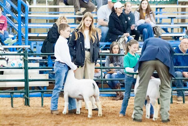 OYE Purebred Ewe Show