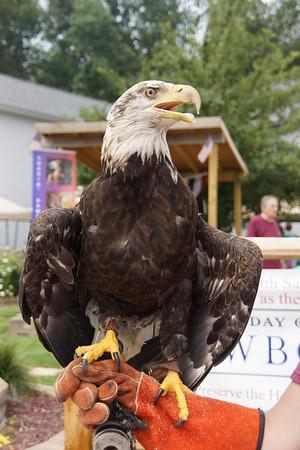 Soarin Hawk