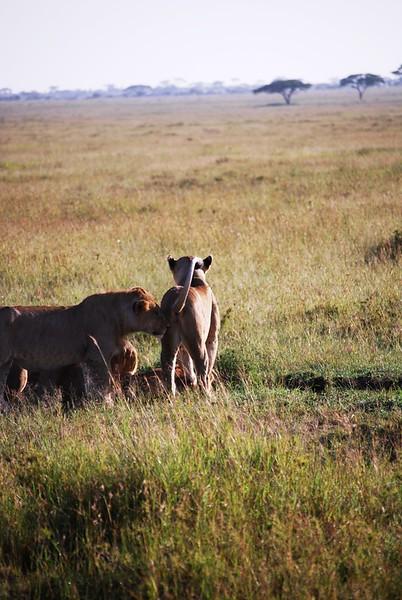 Serengeti (100).JPG