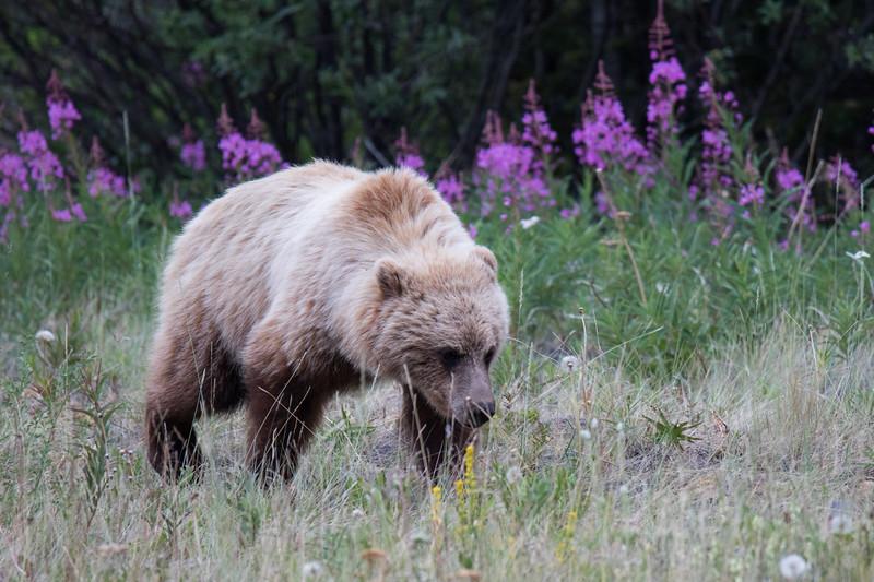 Yukon Canada 2019-11.jpg