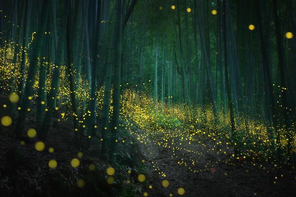 Japan, fireflies