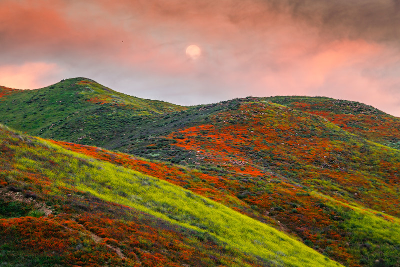 Superbloom Supermoon: Walker Canyon Lake Elsinore Wildflower Superbloom under the Supermoon
