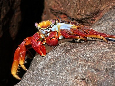 Nature - Arthropods