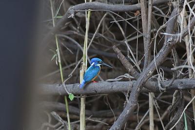 Chobe National Park Safari, Botswana