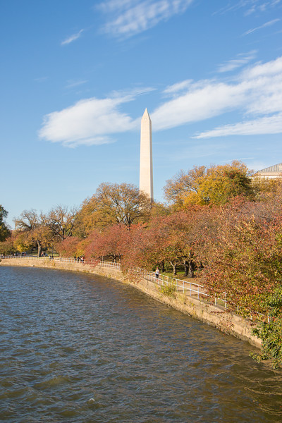 Fall at the Tidal Basin