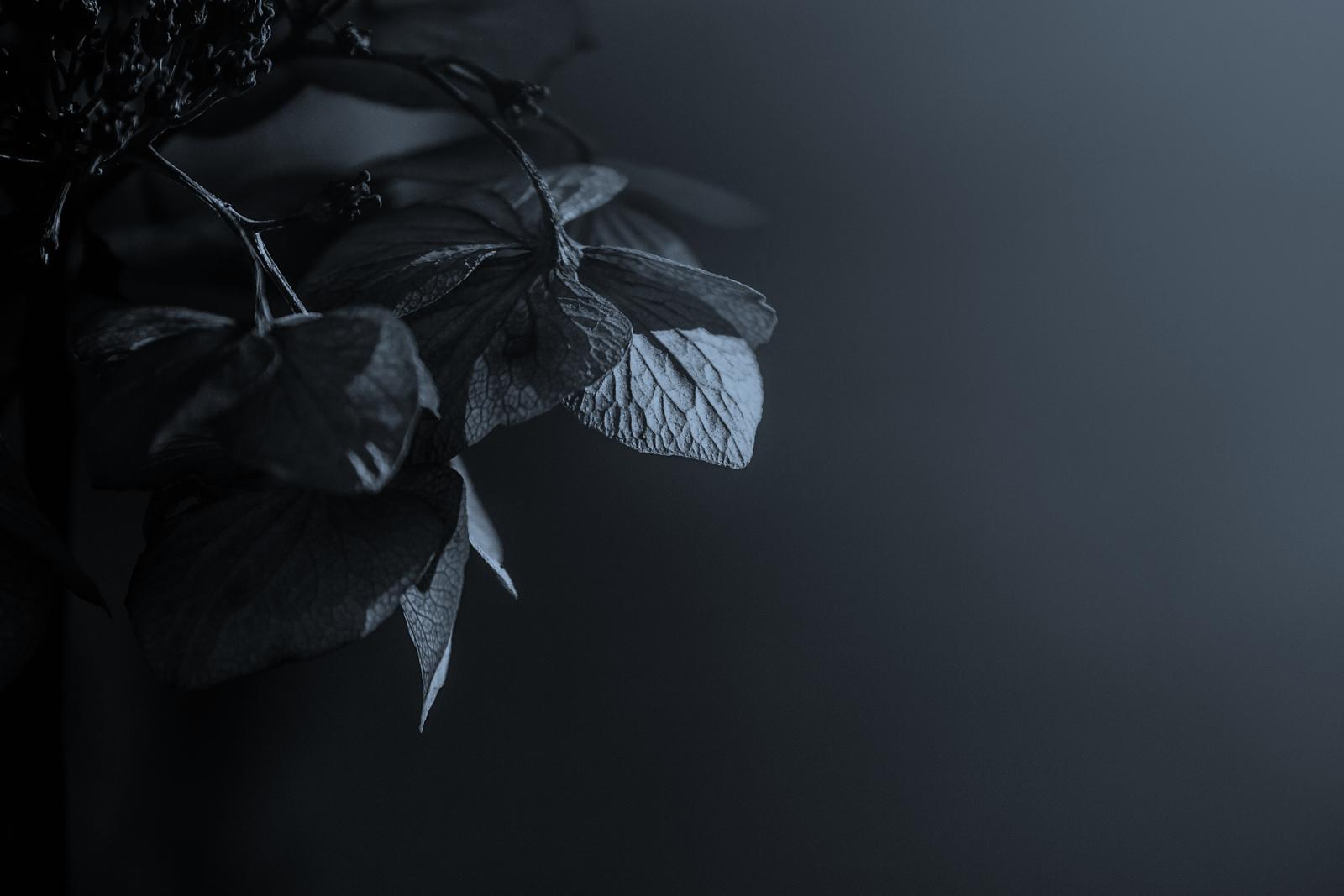光影中的记忆