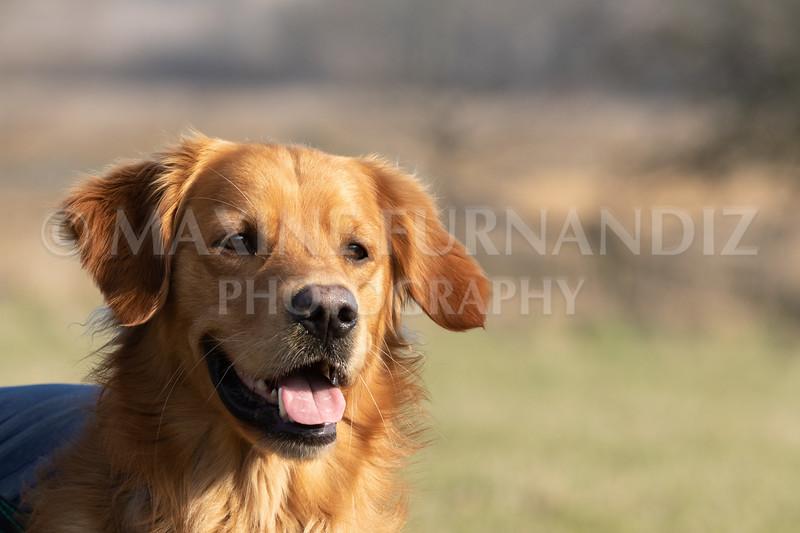 Dog Training Novice GD Feb2019-6029.jpg
