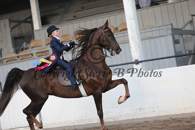 36. Juvenile 3 Gaited Country Pleasure Championship