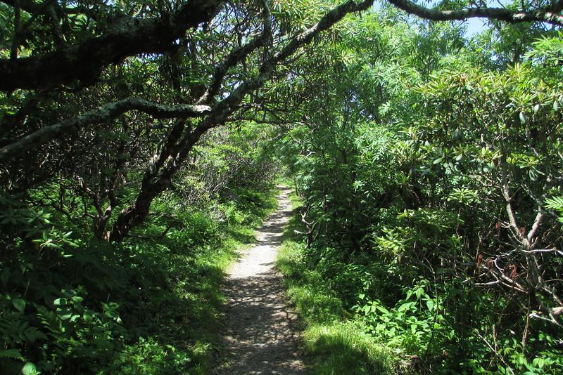 Craggy Pinnacle Trail