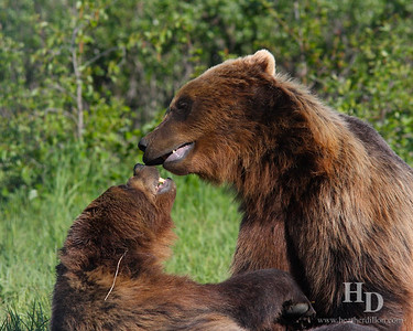 2010-06 Alaska Animals