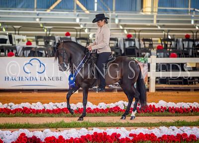 252-Fino Amateur Stallions 5 & 6 Years