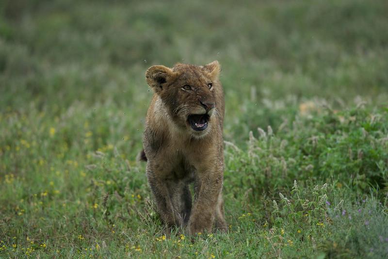 Serengeti_Feb_2013_FH0T7221.tiff.jpg
