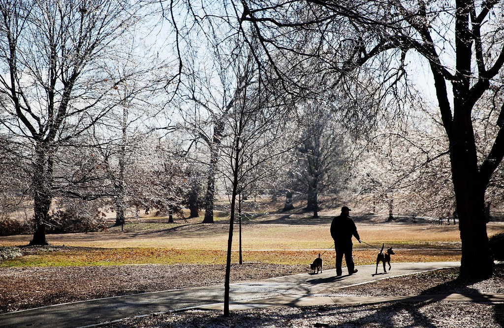 . A man walks his dogs under iced covered trees in Piedmont Park after a winter storm passed through Atlanta, Saturday, Jan. 7, 2017. Snow and sleet pounded a large swath of the U.S. East Coast on Saturday, coating roads with ice and causing hundreds of crashes. In Atlanta and parts of Georgia, people who were expecting a couple of inches of snow instead woke up to a thin coat of ice. (AP Photo/David Goldman)