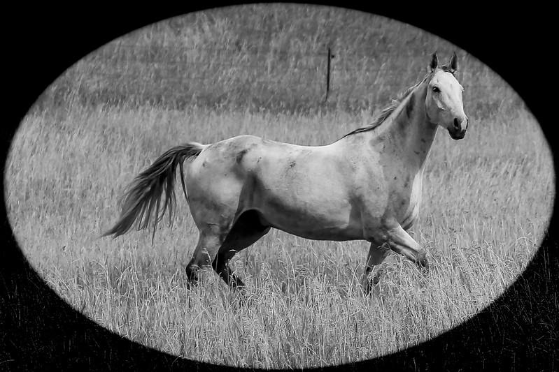 Lyn's pony.jpg
